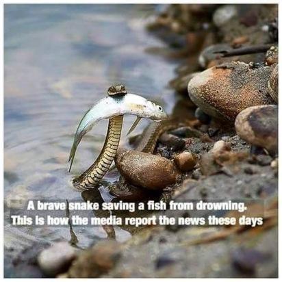 Today's Media